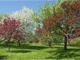 Schöne Kleine Bäume Für Den Garten Die Schönsten Bäume Für Den Eigenen Garten Heimhelden