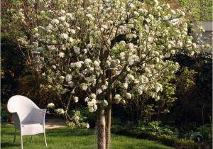 Schöne Kleine Bäume Für Den Garten Ein Baum Für Den Garten Desmondo Wohnen