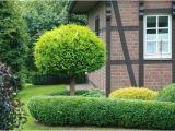 Schöne Kleine Bäume Für Den Garten Fotoshow Übersicht