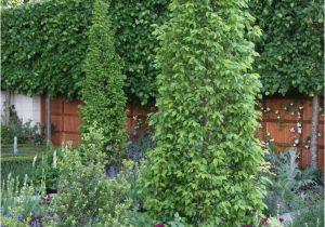 Schöne Kleine Bäume Für Den Garten Hausbäume Für Kleine Gärten Mein Schöner Garten