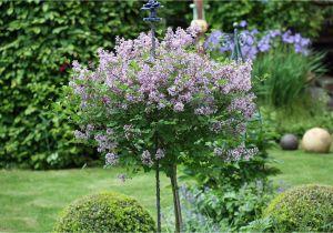 Schöne Kleine Bäume Für Den Garten Kleine Bäumchen Für Den Garten Native Plants Gartenblog
