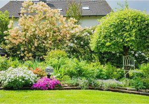 Schöne Kleine Bäume Für Den Garten Kleine Bäume Für Einen Kleinen Garten