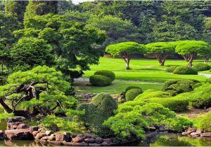 Schöne Kleine Bäume Für Den Garten Schöne Bäume Für Den Garten