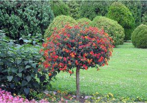 Schöne Kleine Bäume Für Den Garten Schöne Bäume Für Garten B Ume F R Den Garten Frische Haus