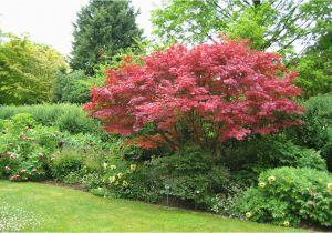 Schöne Kleine Bäume Für Den Garten Welche Bäume Eignen Sich Für Ihren Garten Der Kleine