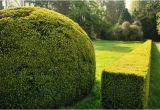 Sichtschutzrollo Für Garten Schöne Heckenarten Für Den Eigenen Garten