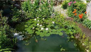 Steintreppe Garten Anlegen Japanischer Garten Anlegen & Gestalten