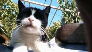 Was ist Gut Gegen Katzen Im Garten Tun Was Tun Gegen Katzen Im Garten 1 sonic Ultrasonic Set Kann