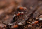 Was Tun Gegen Schilf Im Garten Was Tun Gegen Ameisen Im Garten 8 Tipps & Tricks
