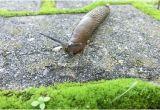 Was Tun Gegen Schilf Im Garten Was Tun Gegen Schnecken Im Garten – Nanotime Uafo