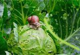 Was Tun Gegen Schilf Im Garten Was Tun Gegen Schnecken Im Gemüse Garten Heimhelden