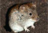 Wie Kann Man Mäuse Im Garten Vertreiben Mause Im Garten Vertreiben Hl Hausmittel Aus Dem Naturlich