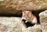 Wie Kann Man Mäuse Im Garten Vertreiben Mause Im Garten Vertreiben Me 209 Wie Kann Man Aus Dem