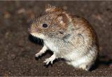 Wie Kann Man Mäuse Im Garten Vertreiben Mause Im Garten Vertreiben Ohne Gift Naturlich Aus Dem