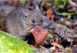 Wie Kann Man Mäuse Im Garten Vertreiben Mause Vertreiben Sind Niedlich Aber Nicht Im Haus Artikel