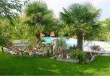 Winterharte Palmen Für Den Garten Die Richtige Palme Für Den Garten Kaufen